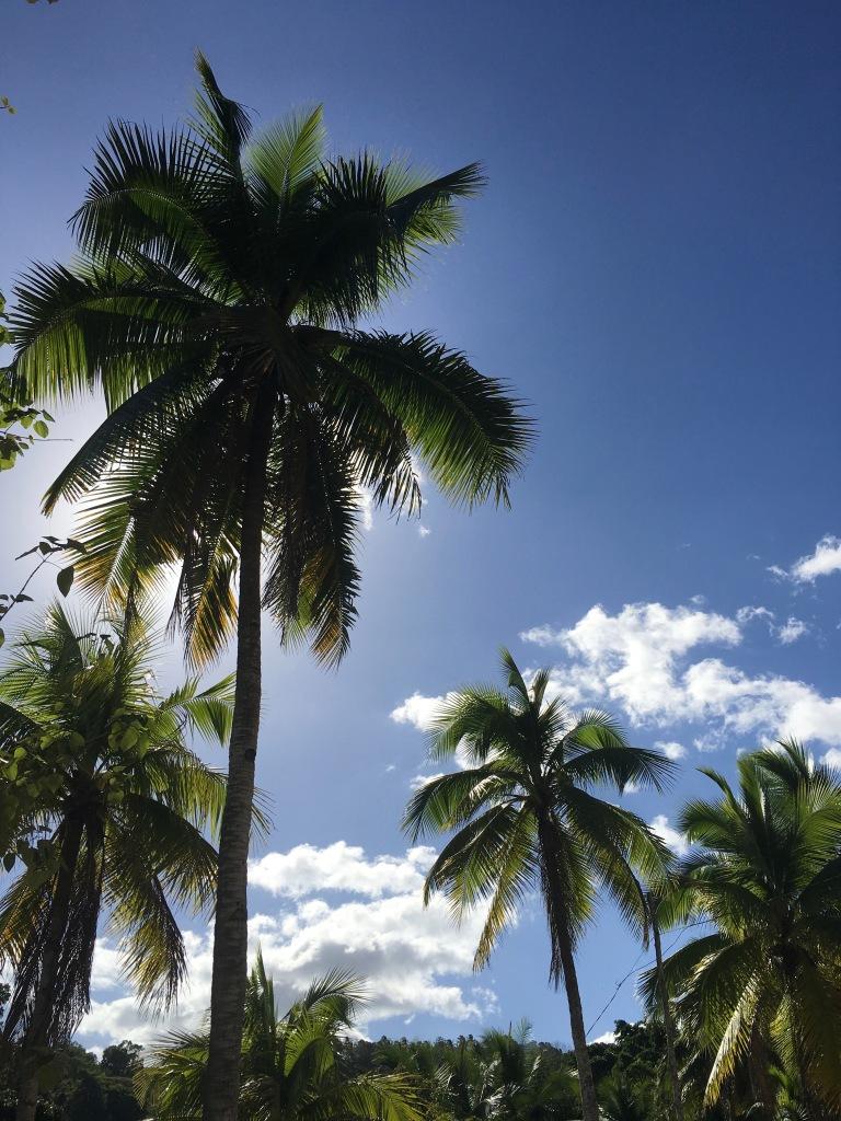 palme-bohol