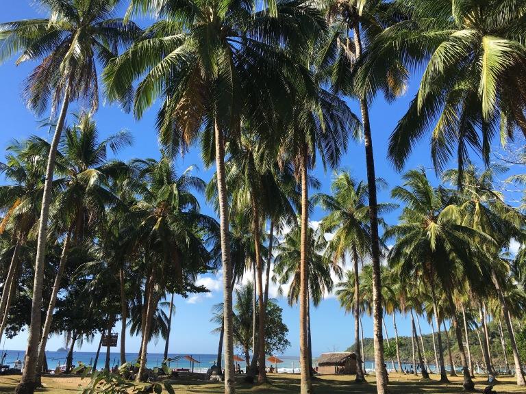 palme-nagtabon-beach-palawan