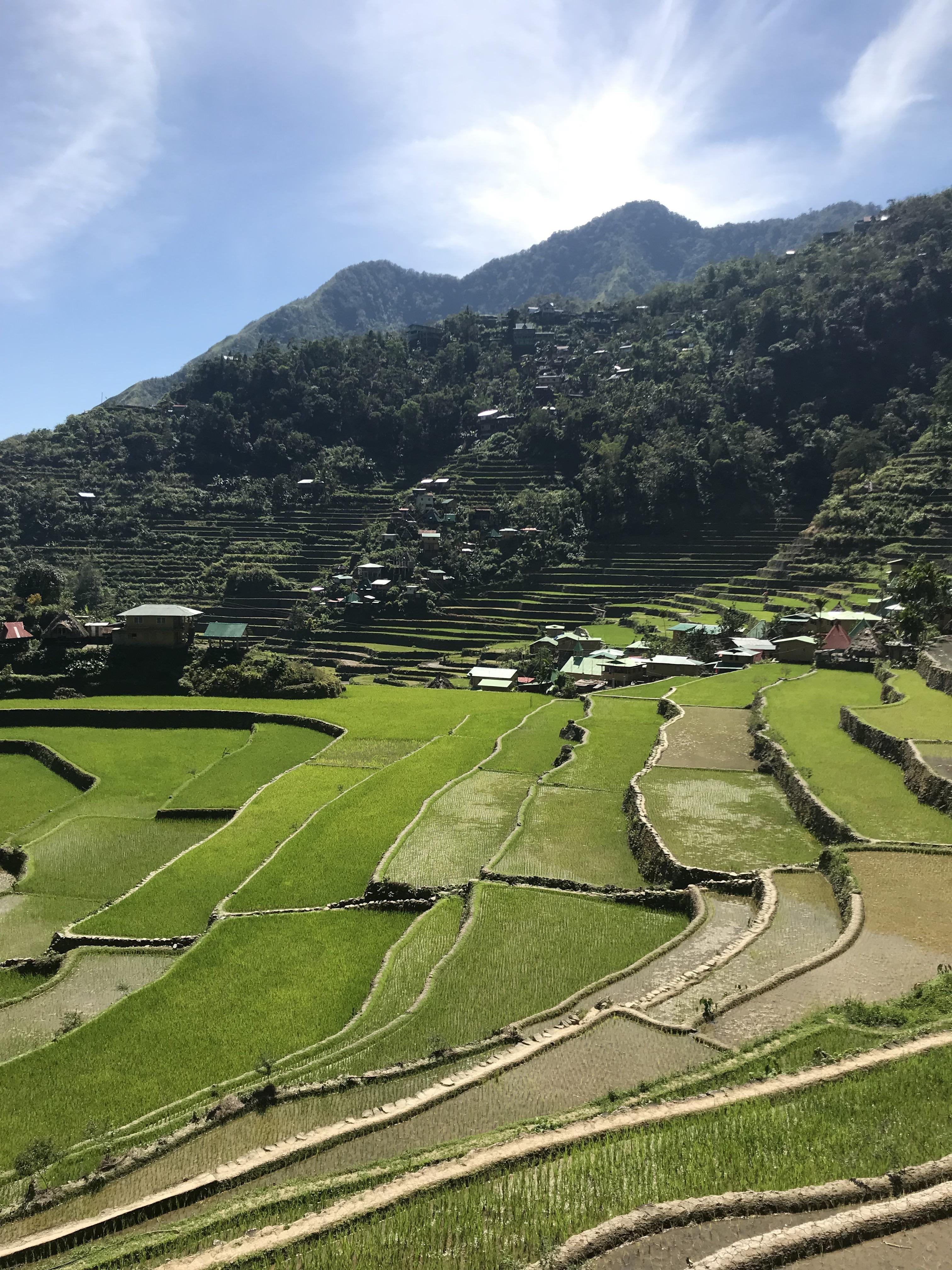 risaie-terrazza-batad