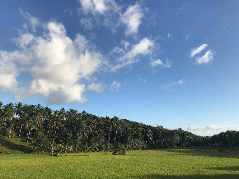 palme-risaie-bohol