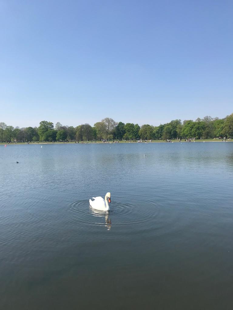 parco-kensingtons-garden-londra