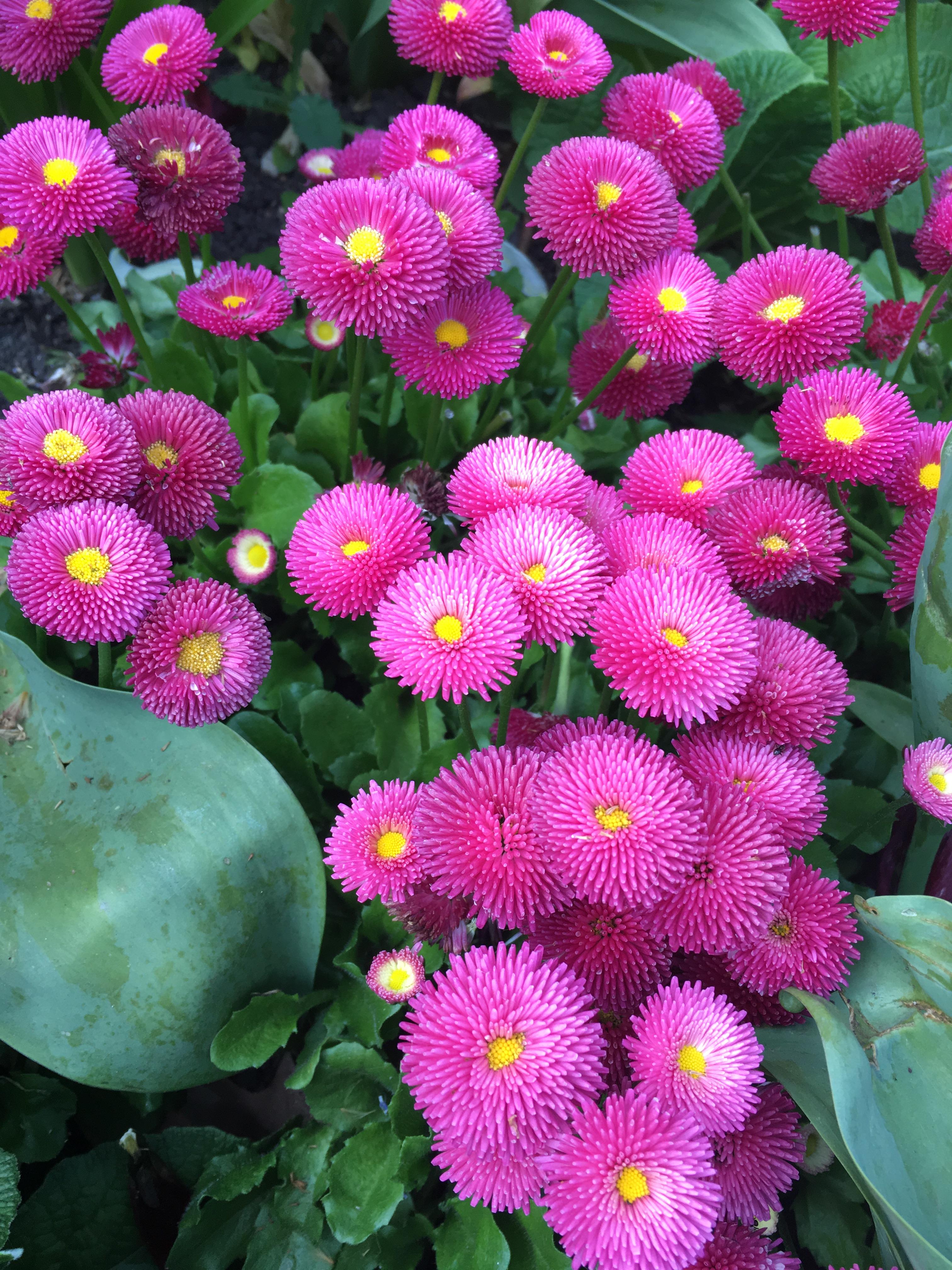 fiori-st-james-park-londra