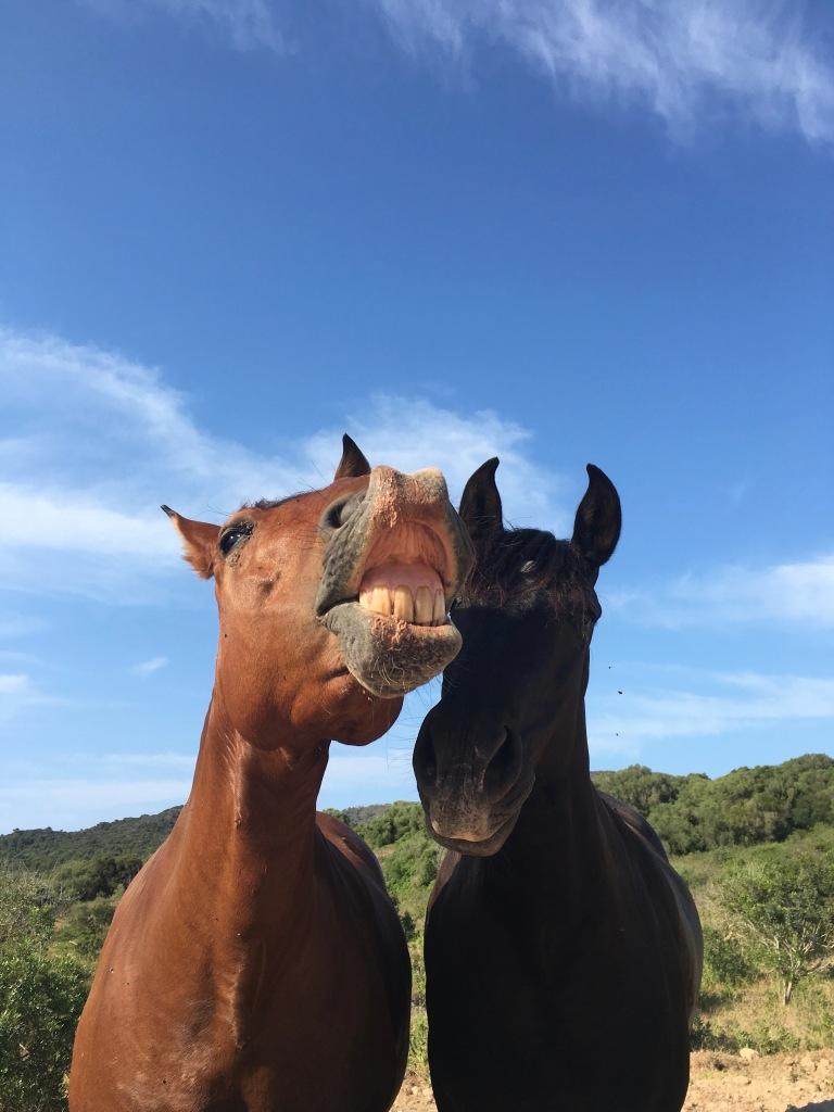 cavalli-minorchini-dettagli-minorca-spagna