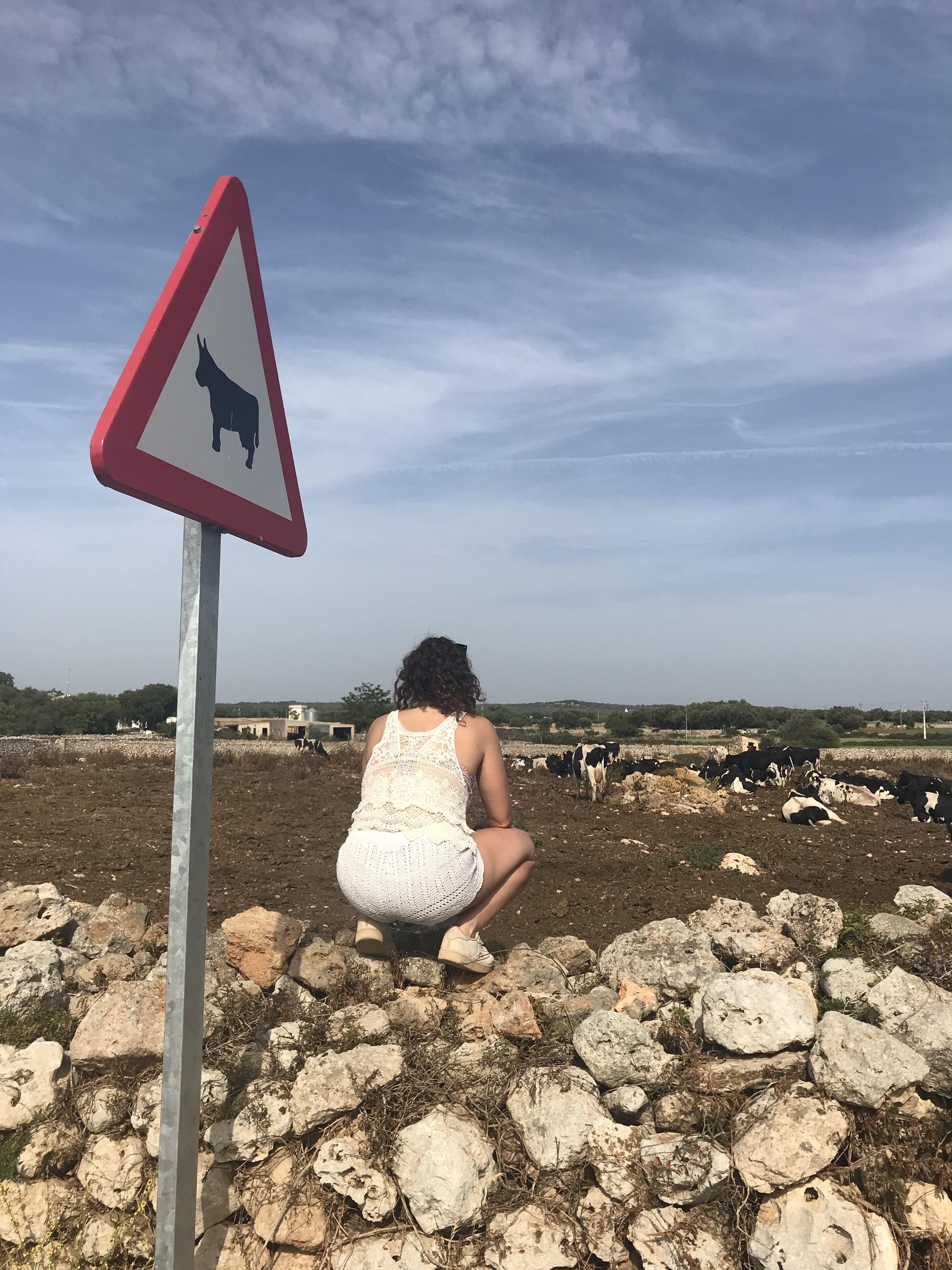 cartello-stradale-attraversamento-mucche-minorca
