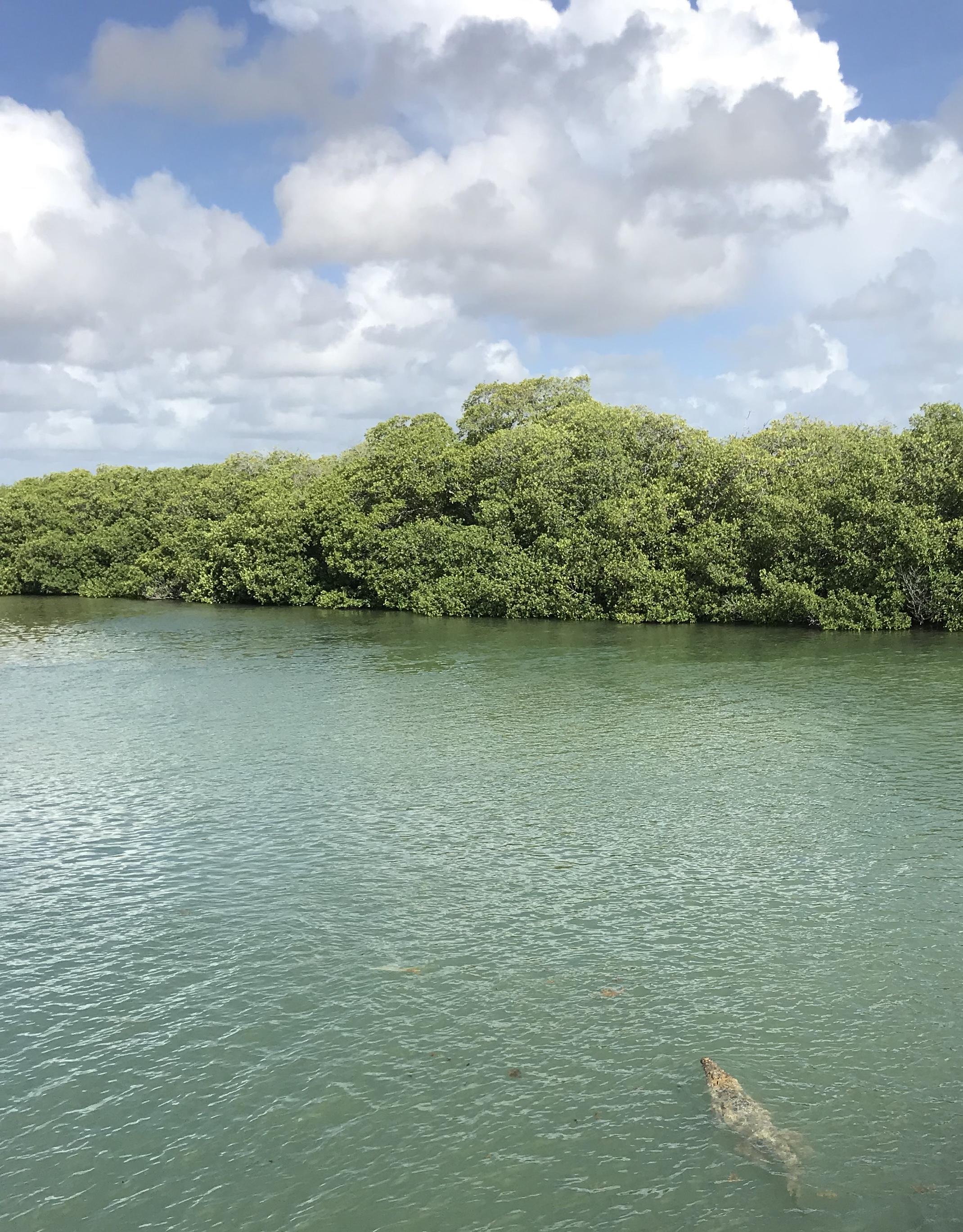 coccodrillo-riserva-sian-kaan-quintana-roo-messico