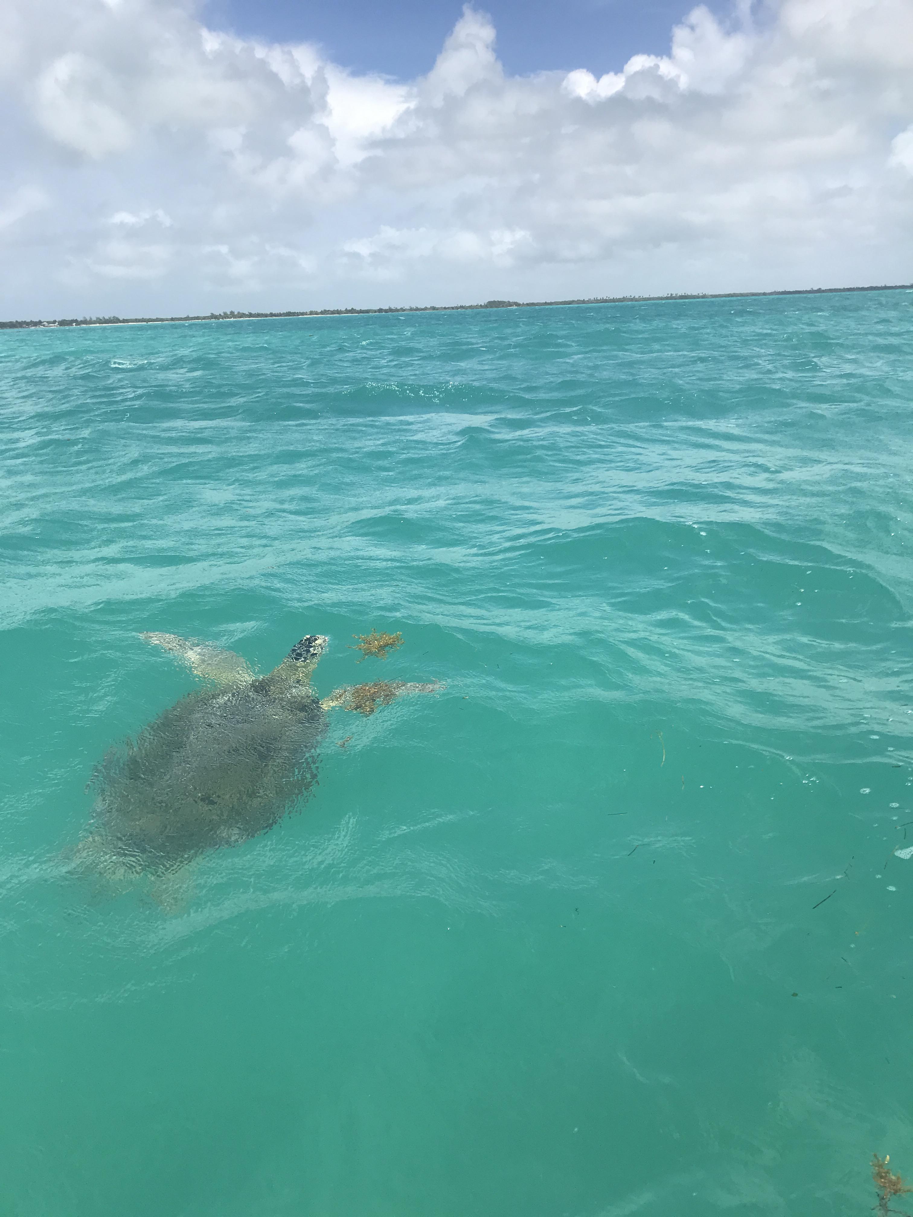 tartaruga-marina-riserva-sian-kaan-quintana-roo-messico