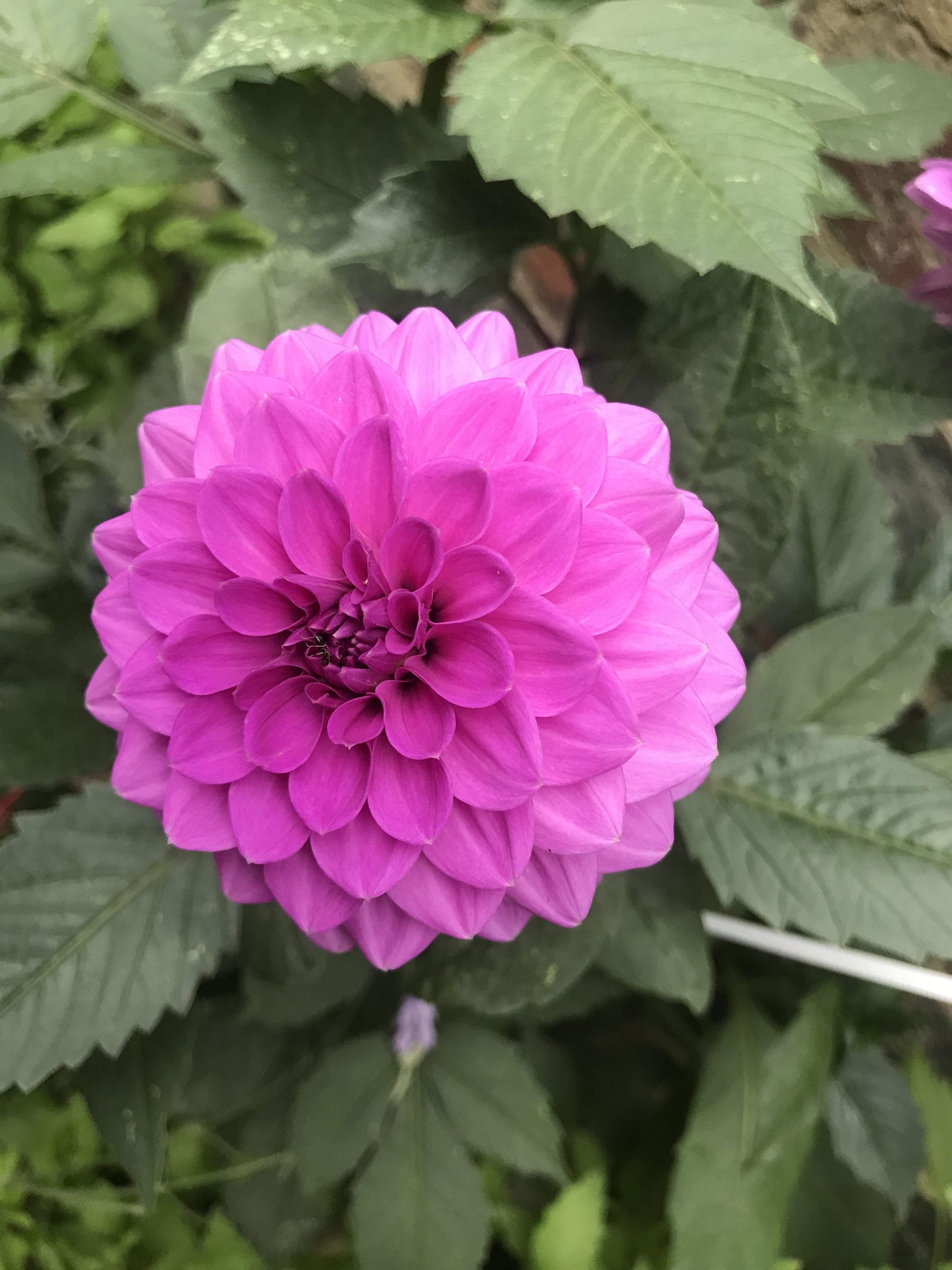 fiore-cortile-lubecca-schleswig-holstein-germania