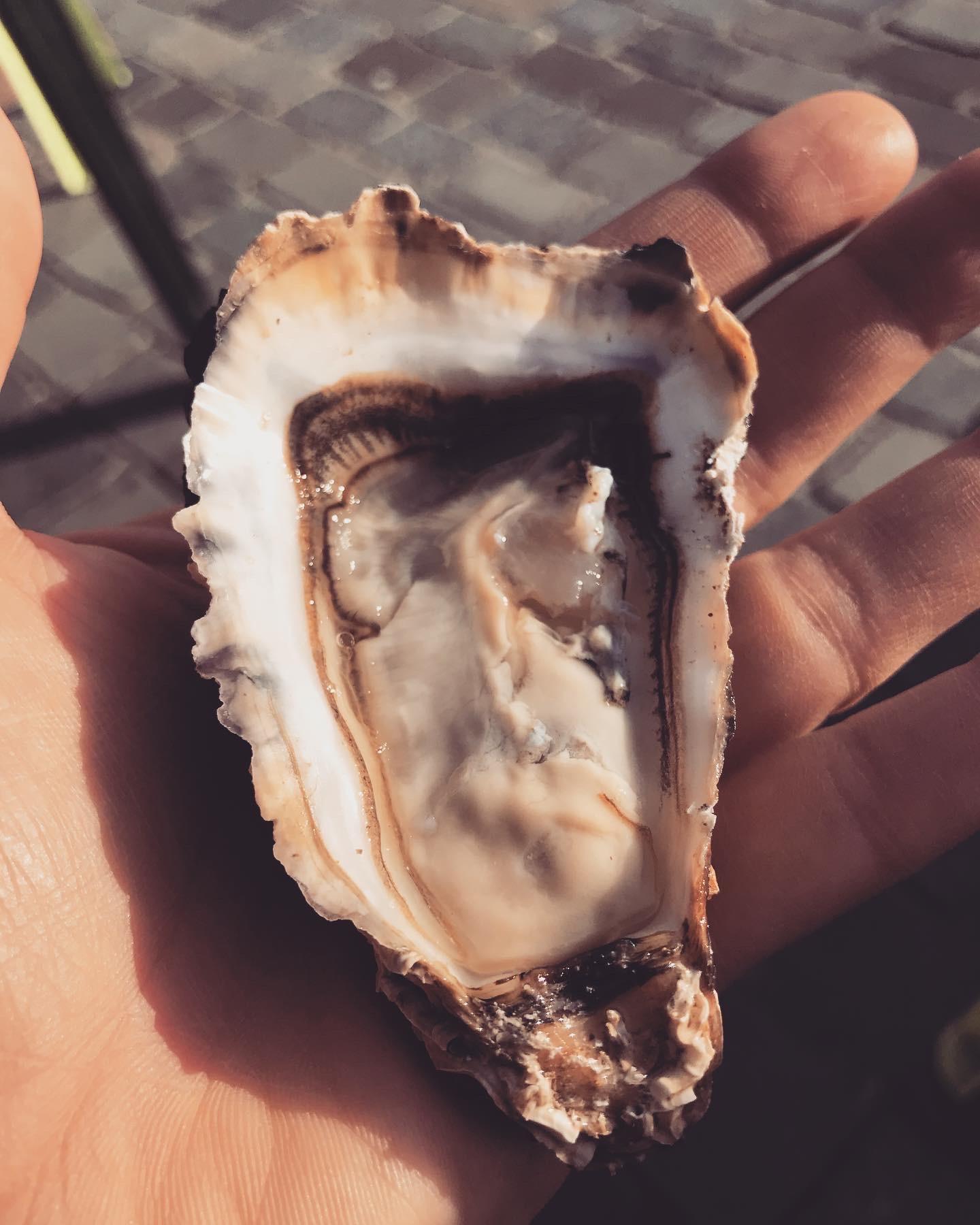 ostrica-bordeaux-francia