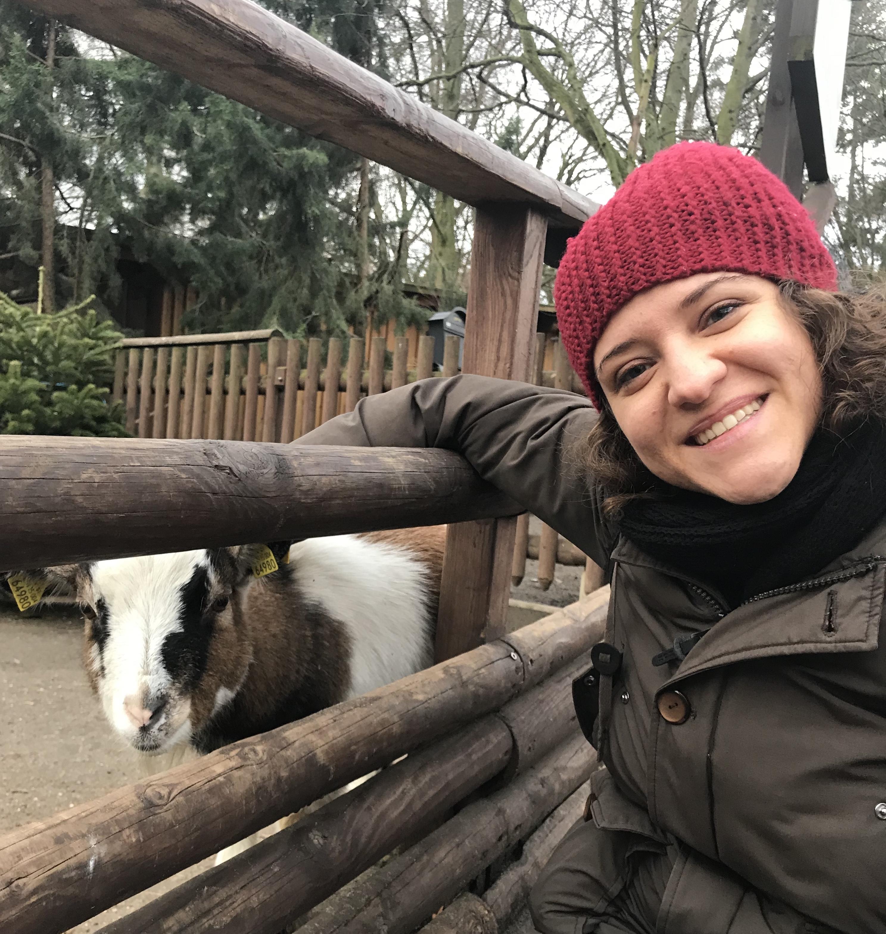capre-zoo-hasenheide-berlino