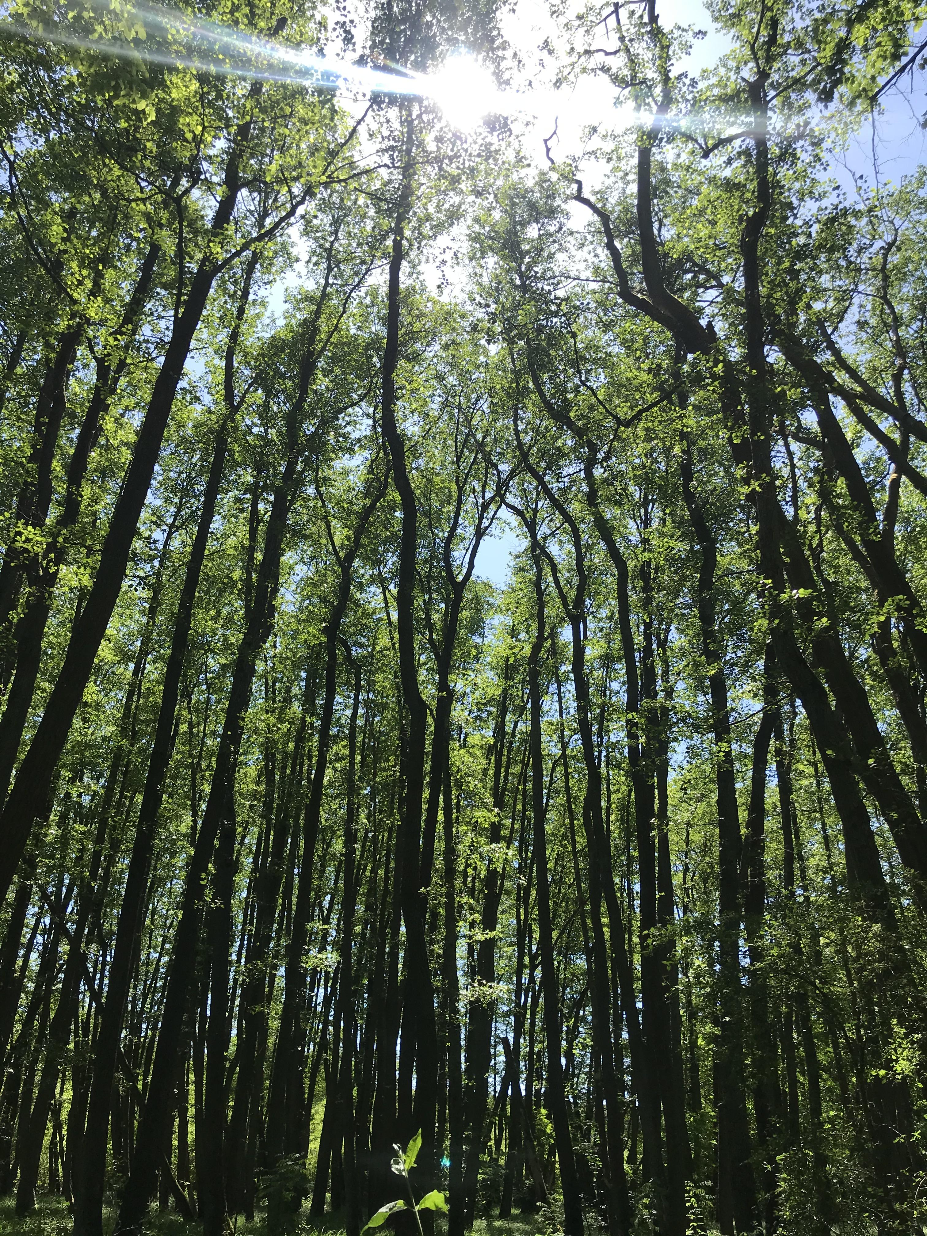 vegetazione-hiking-märkische-schweiz-germania