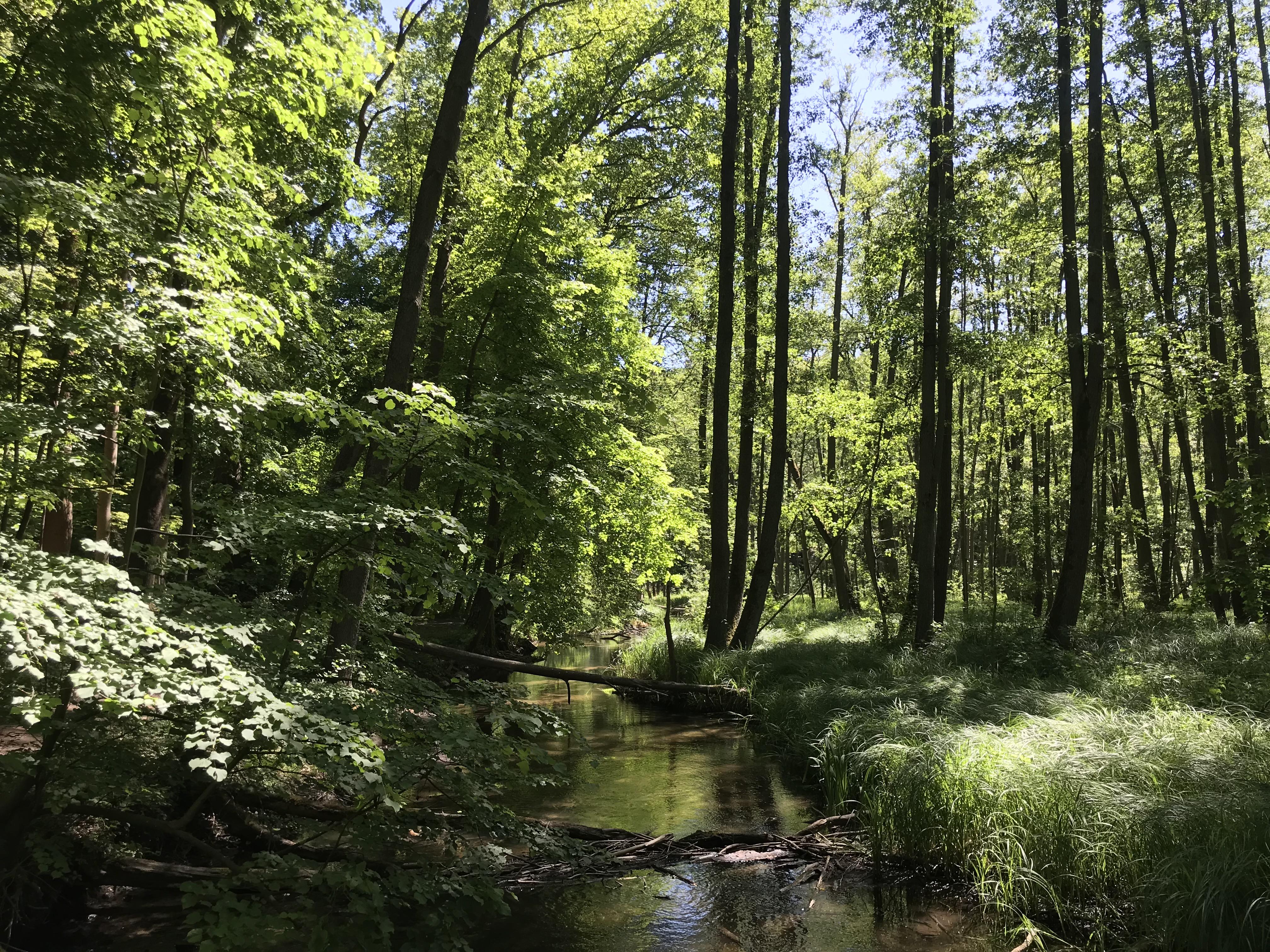 natura-märkische-schweiz-germania