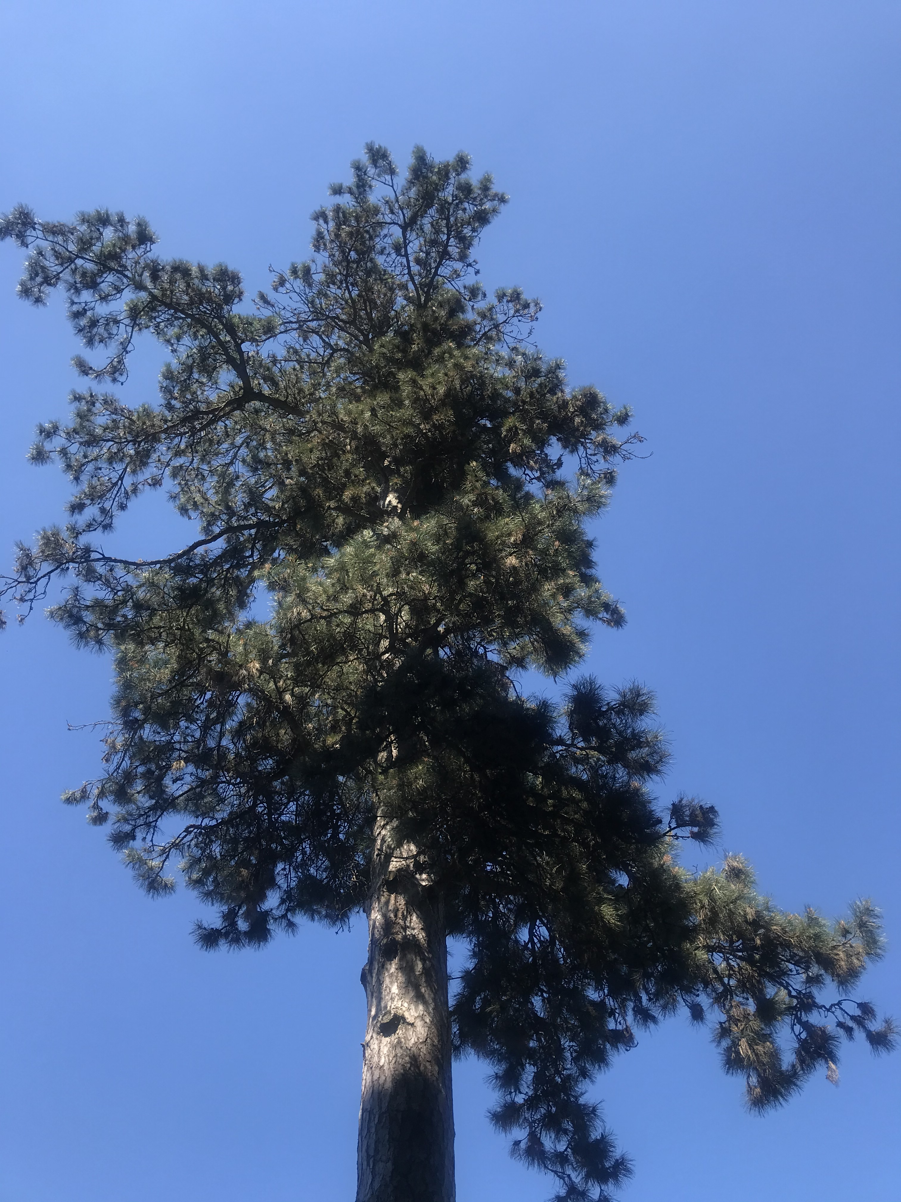 alberi-parco-pallavicino-stresa-italia