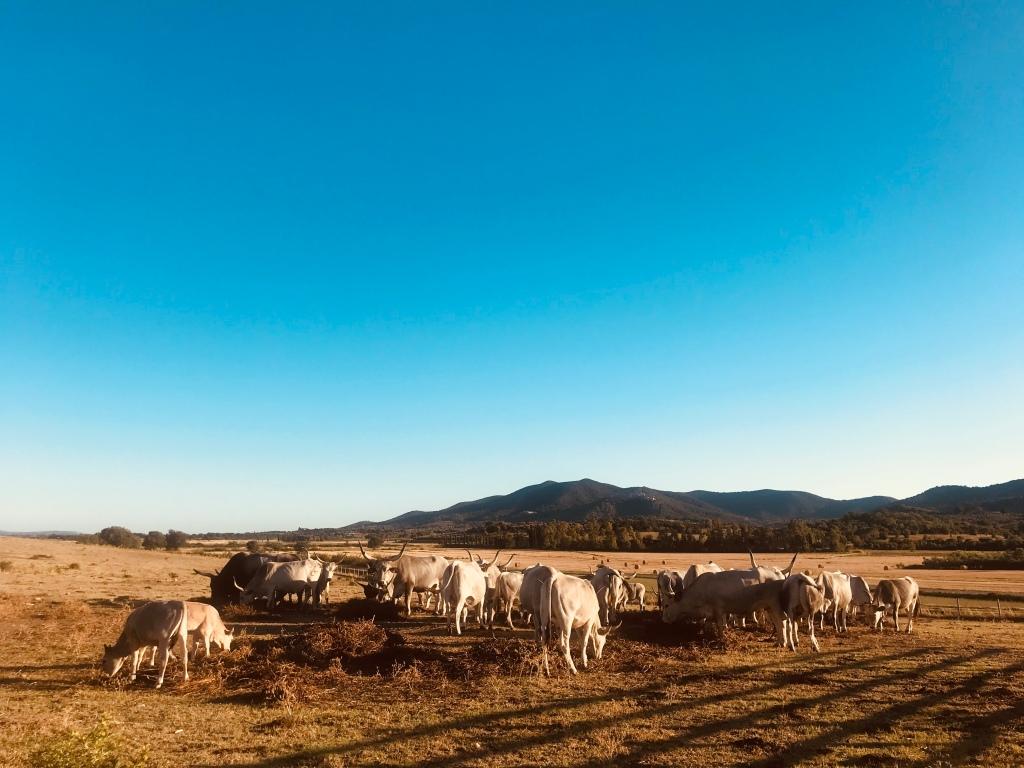 Azienda agricola Badia Vecchia, il mio posto del cuore in Maremma - Castiglione della Pescaia, Italia, pianeta Terra