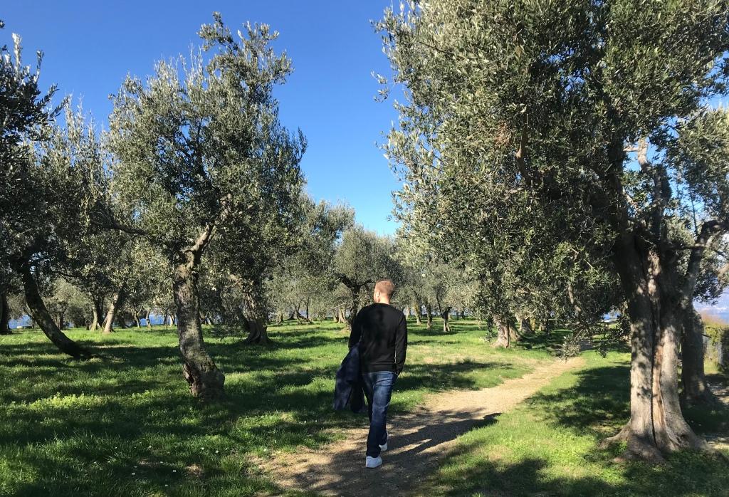 Johannes passeggia tra gli olivi del parco delle Grotte di Catullo - Sirmione, Brescia, Italia