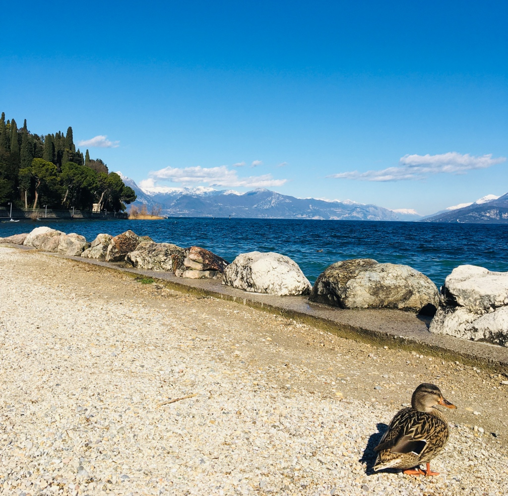 Un'anatra si gode il sole alla spiaggia delle Muse - Sirmione, Brescia, Italia