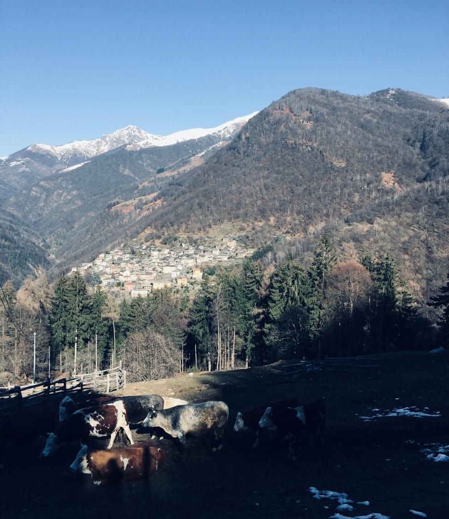Paesini arroccati e mucche al pascolo - Val Veddasca, Varese, Italia
