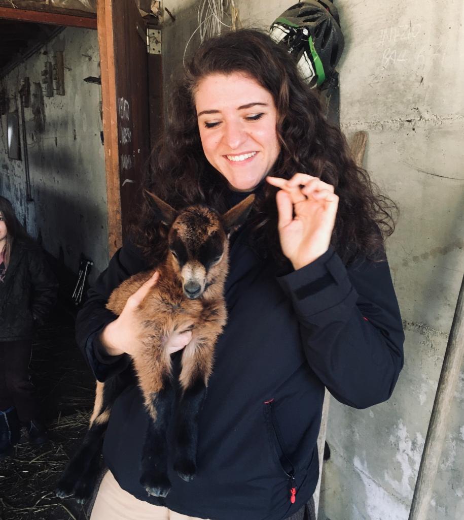 Cucciolo di capra dolcissimo all'azienda agricola Capre e Cavoli - Vararo, Varese, Italia