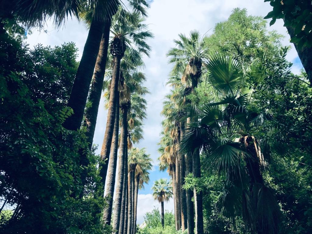 Splendide piante abitano il Giardino Nazionale - Atene, Grecia