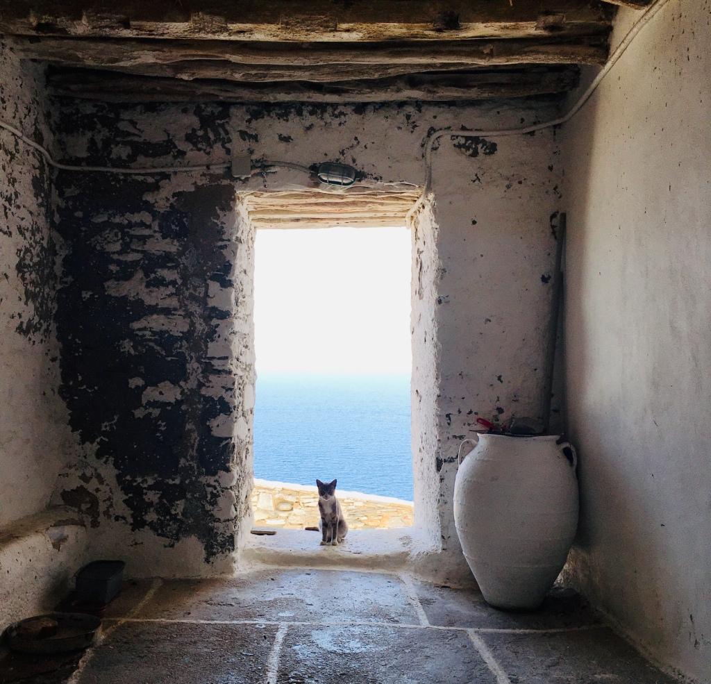 I gatti sono gli abitanti più numerosi di Kastro - Sifnos, Isole Cicladi, Grecia